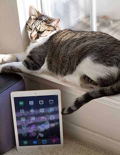 iPad Air 2 Review - MobileTechReview